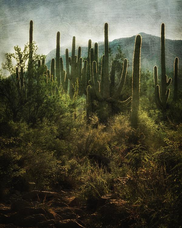 Saguaro National Park, West, Tucson, Arizona