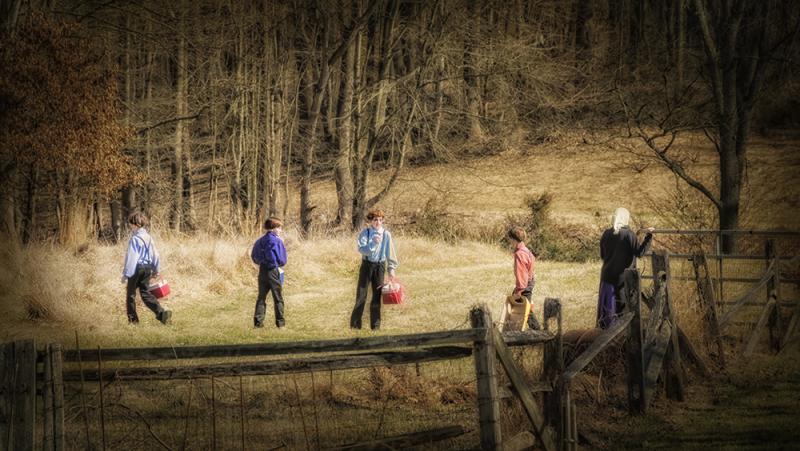 Amish Scholars
