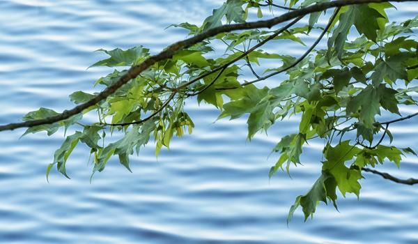 Leaves_&_Water