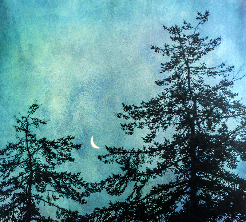 Firs and Moon