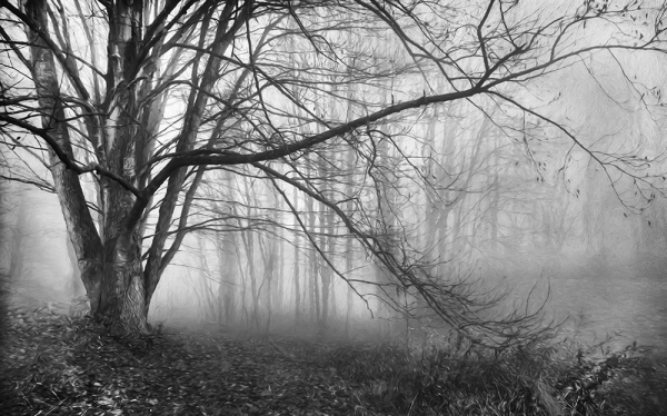 Tree & Fog in B & W