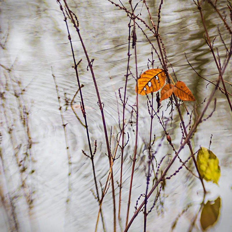 leaves and pond