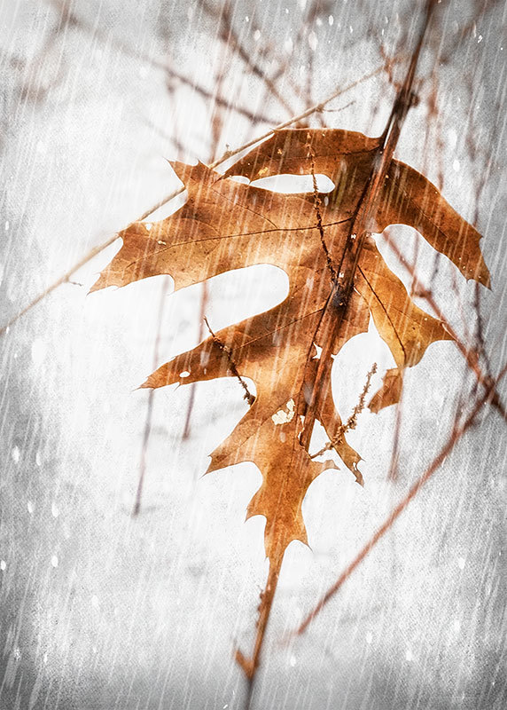 Aminus3 Featured photo Leaf in Snow | 22 February 2019