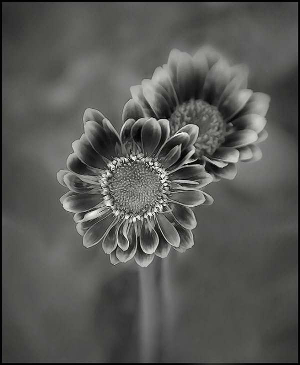 flowers in B&W