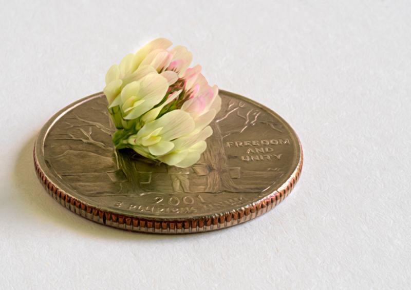 Clover or Coin?