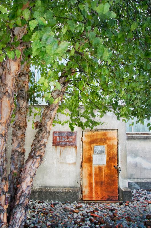 Door with Tree