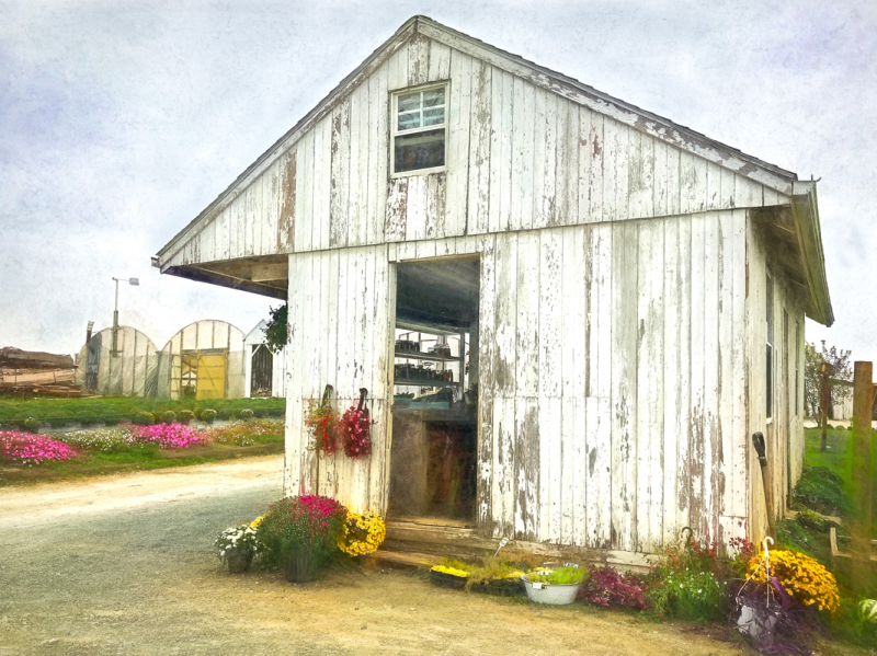 Amish Produce Stand 1