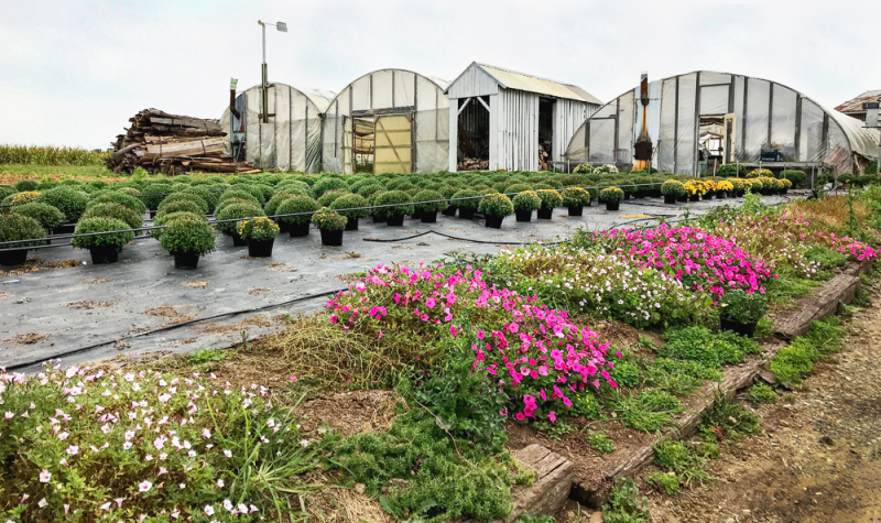 Greenhouses for Produce Stand