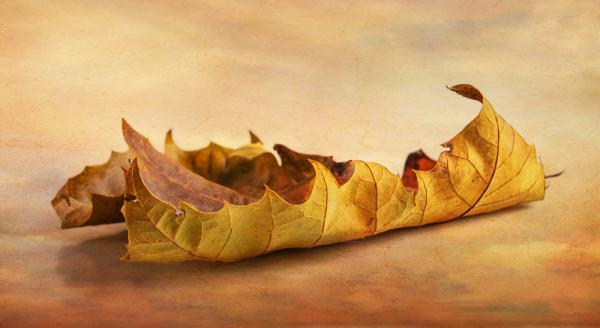 Oak Leaf 1