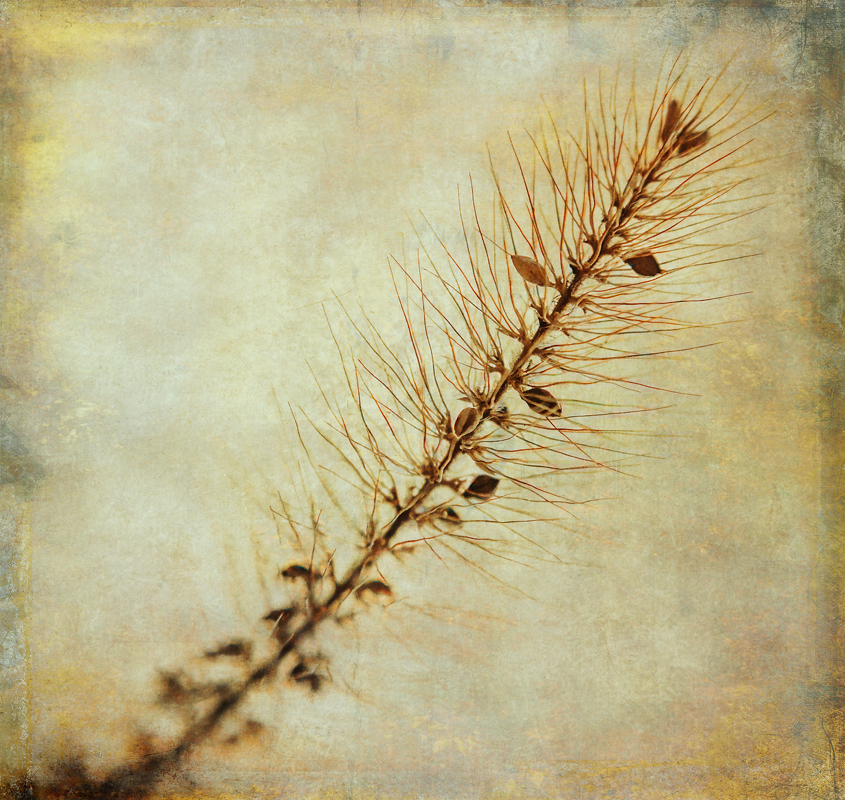 The seeds of Dry Grasses