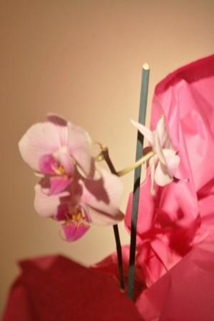 Une orchidée de cadeau