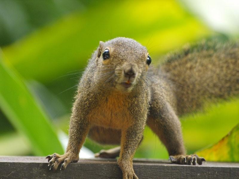 Squirrel (2)