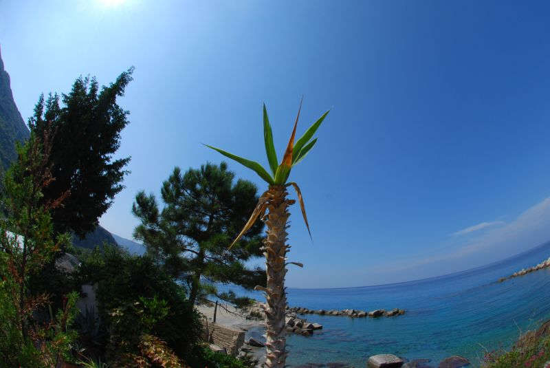 a nice plant in Favazzina (Italy)