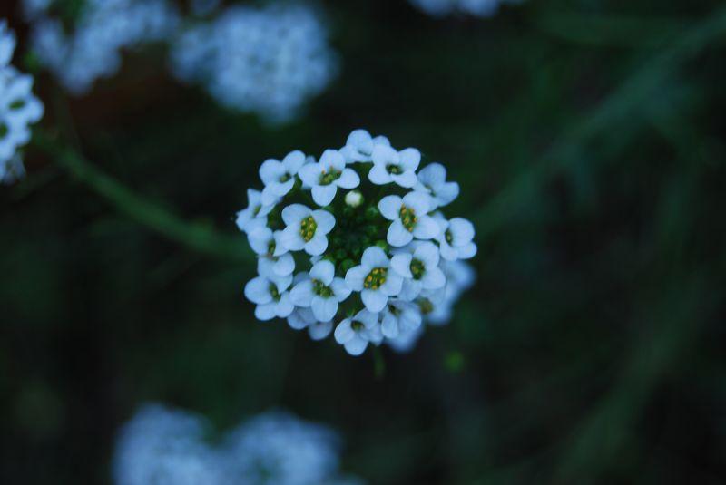a flower in Orti' near Reggio Calabria I(taly)