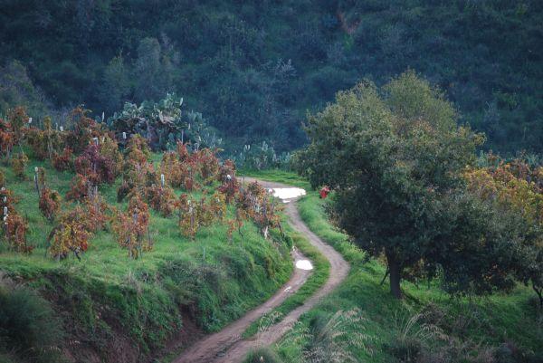 landscape above Reggio Calabria (Italy)
