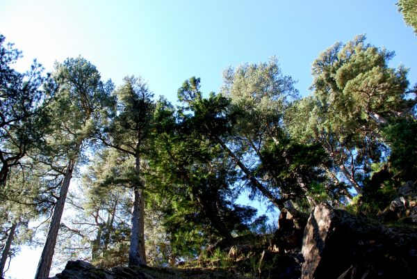 trees in Calabria, Italy