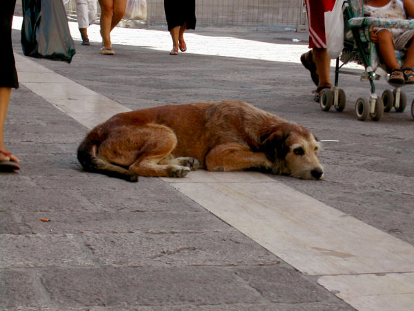 a dog in Lecce (part 1)