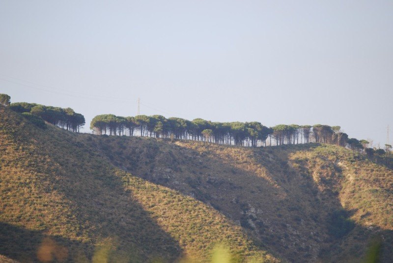 These trees over a hill are like kings
