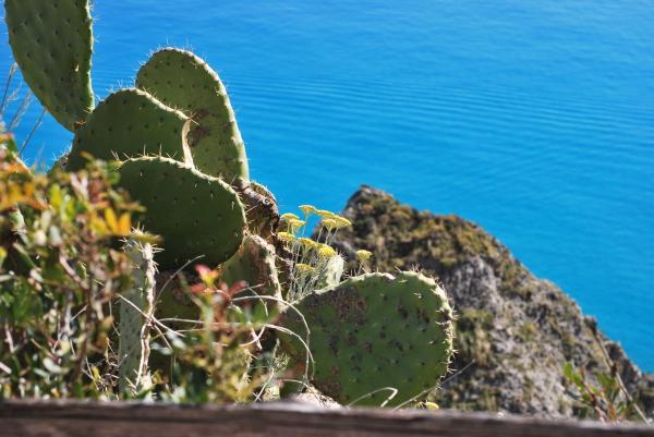 Cactus from Calabria