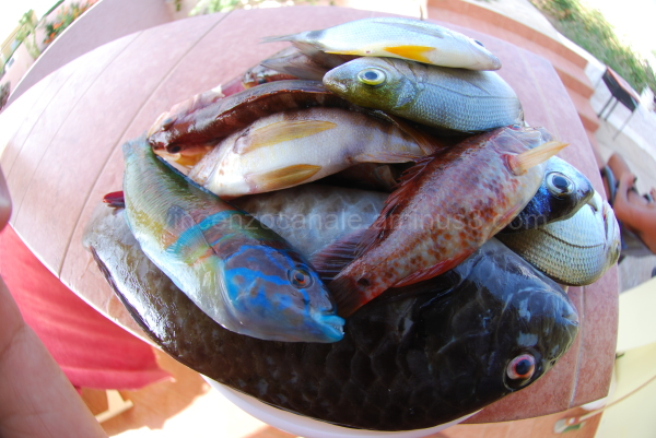 A picture of fishes with a fisheye lense.