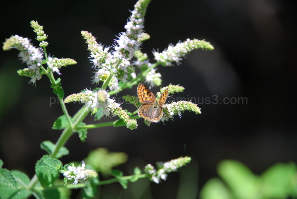 A picture of a butterfly and its flower in Italy.