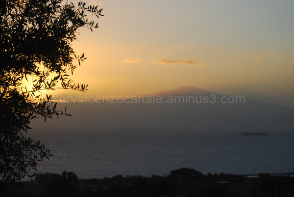View of a tree in front of volcano Etna at sunset.