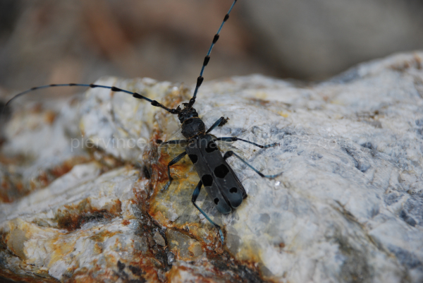 A view of a black flying insect in the mountains.