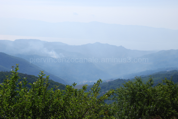 A view of a forest in Aspromonte, Italy, Europe.