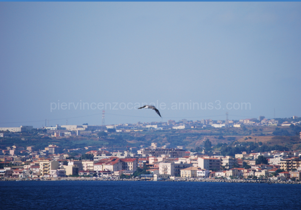 A bird flying freely in southern Italy, Europe.