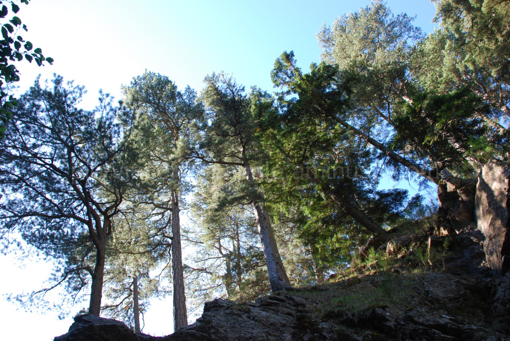 A view of the trees of Aspromonte, Italy.