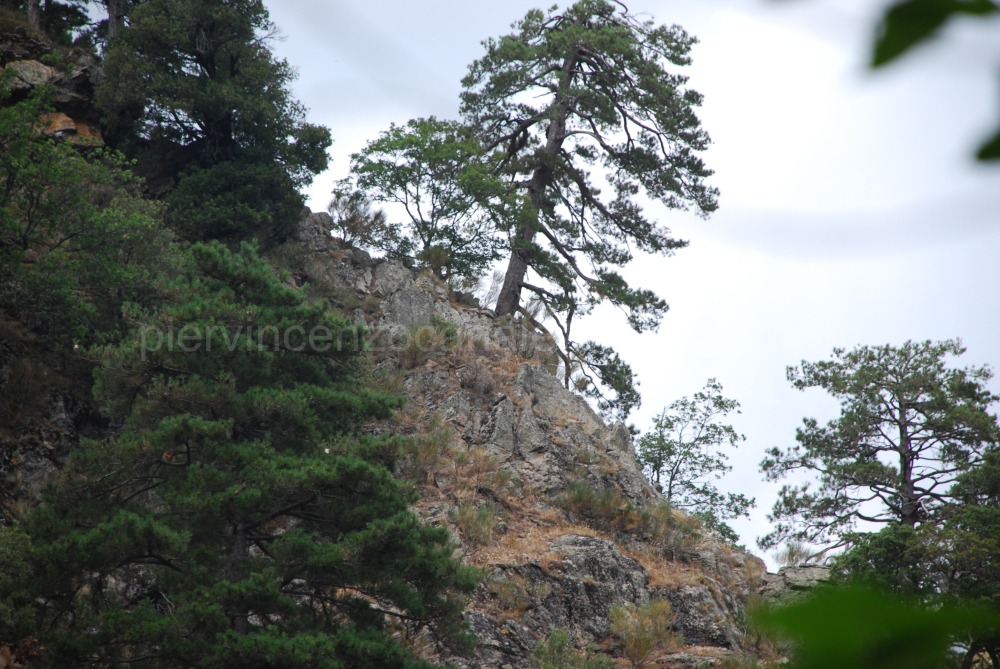 A view of a tree on top of a rock in Aspromonte.