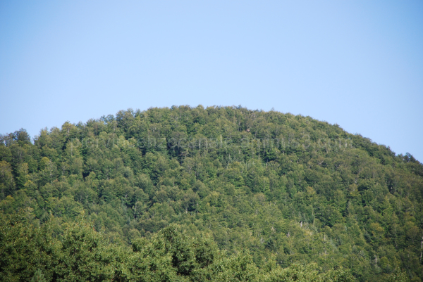 The trees of the mountains in Aspromonte, Italy.