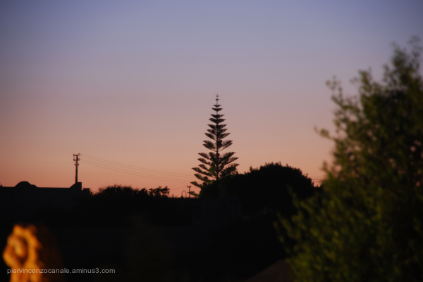 A view of a tree in Lampedusa at sunset.