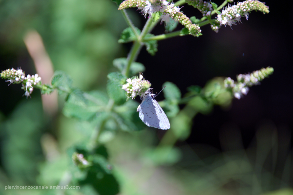 Vegetables welcoming a blue butterfly