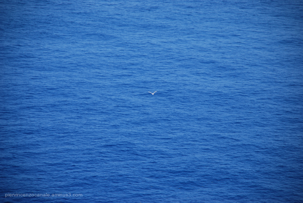 Back of a bird above the Mediterranean