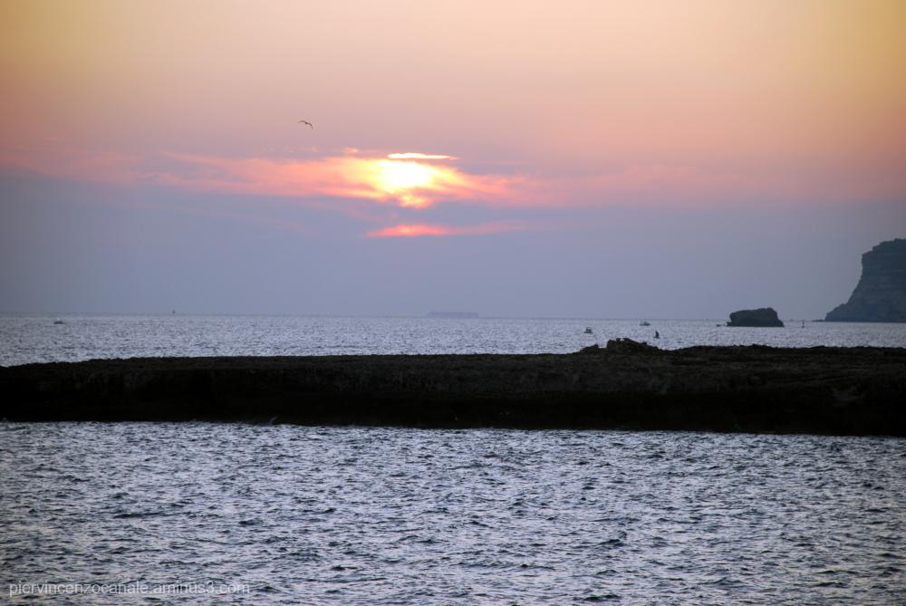 Flying bird over sunset in Lampedusa, Italy.