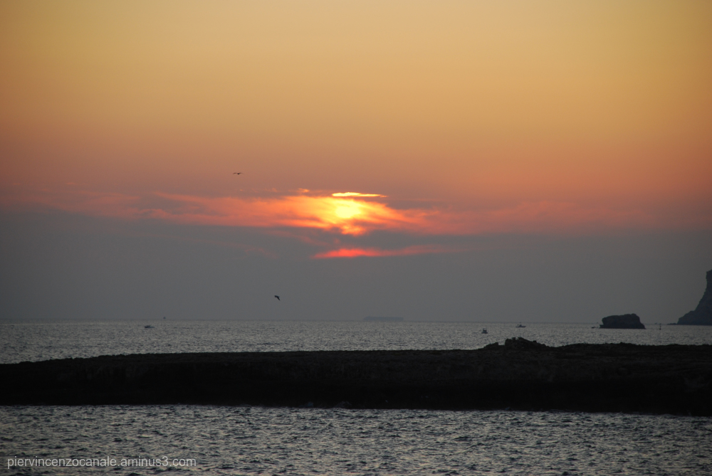 Each sunset has its flying birds. Lampedusa, Italy
