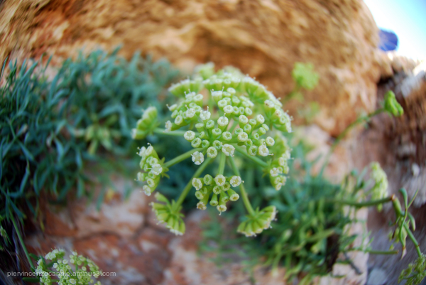Flower over a rock in Lampedusa, Italy.