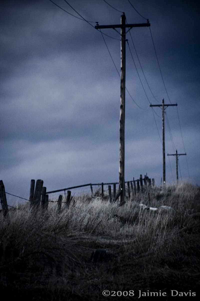 Telephone Poles at Dusk