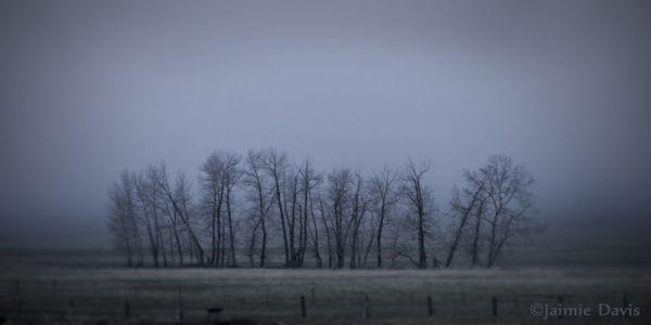 Foggy Tree Grove