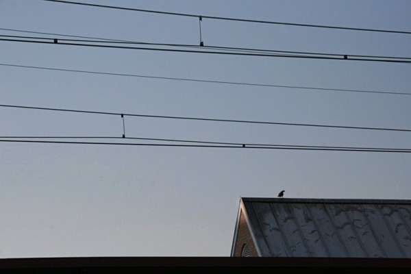 Loney bird atop a roof in New Brunswick NJ
