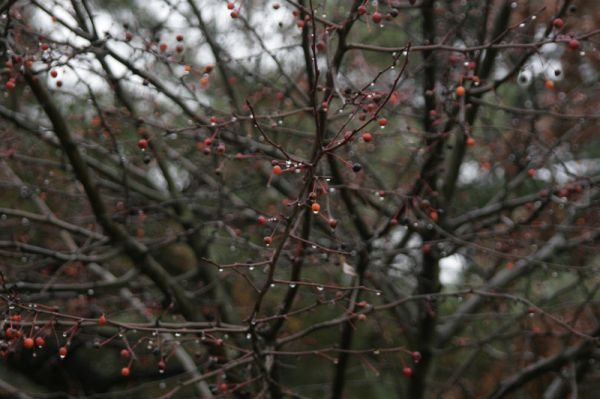 Berries and droplets