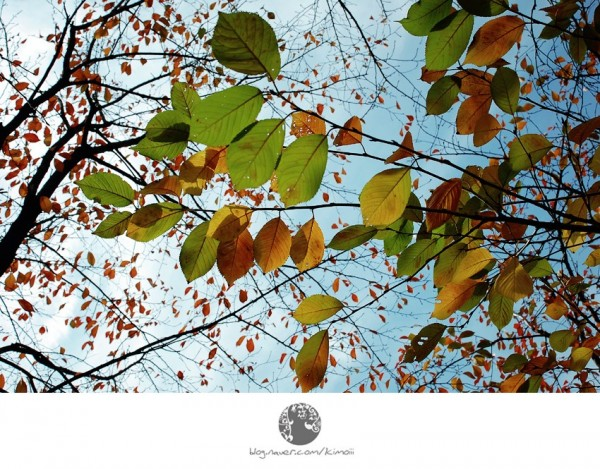 korea, seoul, autumn