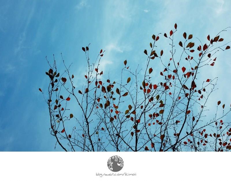 korea, seoul, autumn, leaves