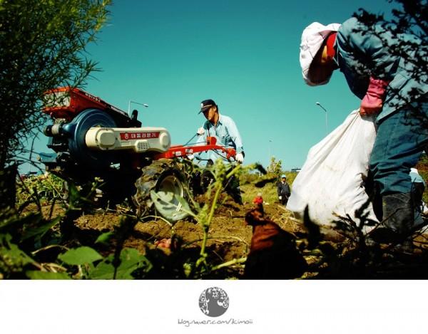 korea, seoul, farmer