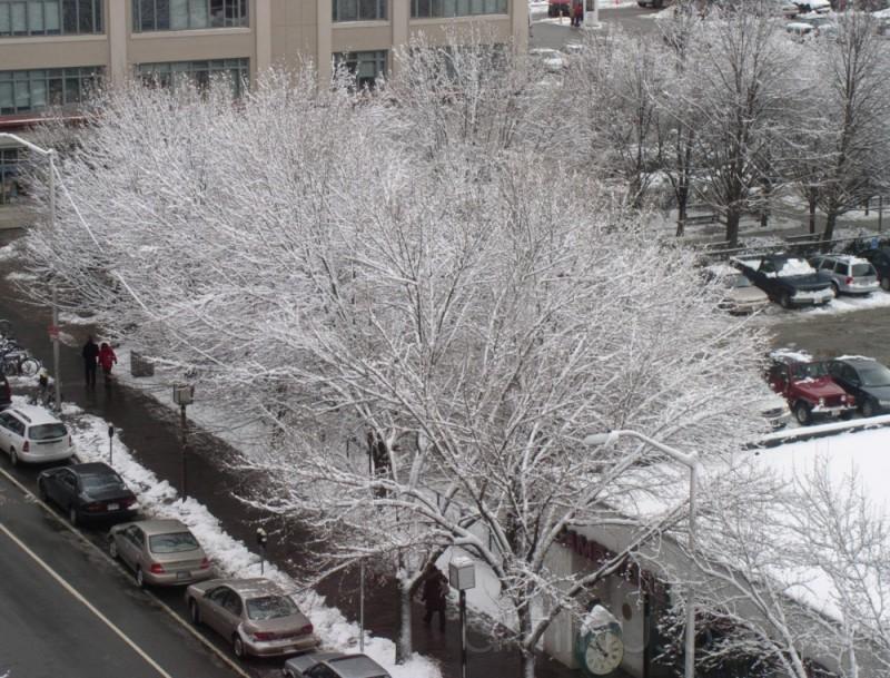 Snowy Cambridge