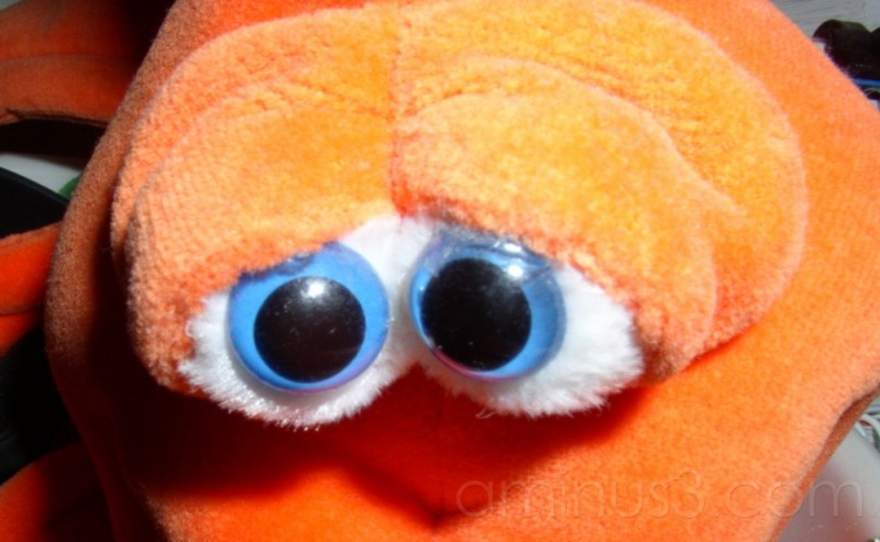 toy fish eyes
