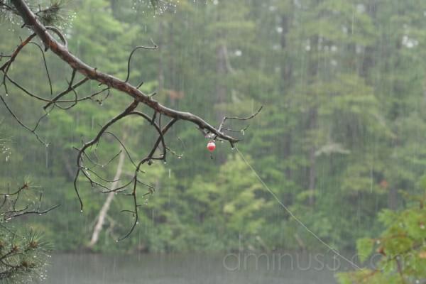 Caught Tree