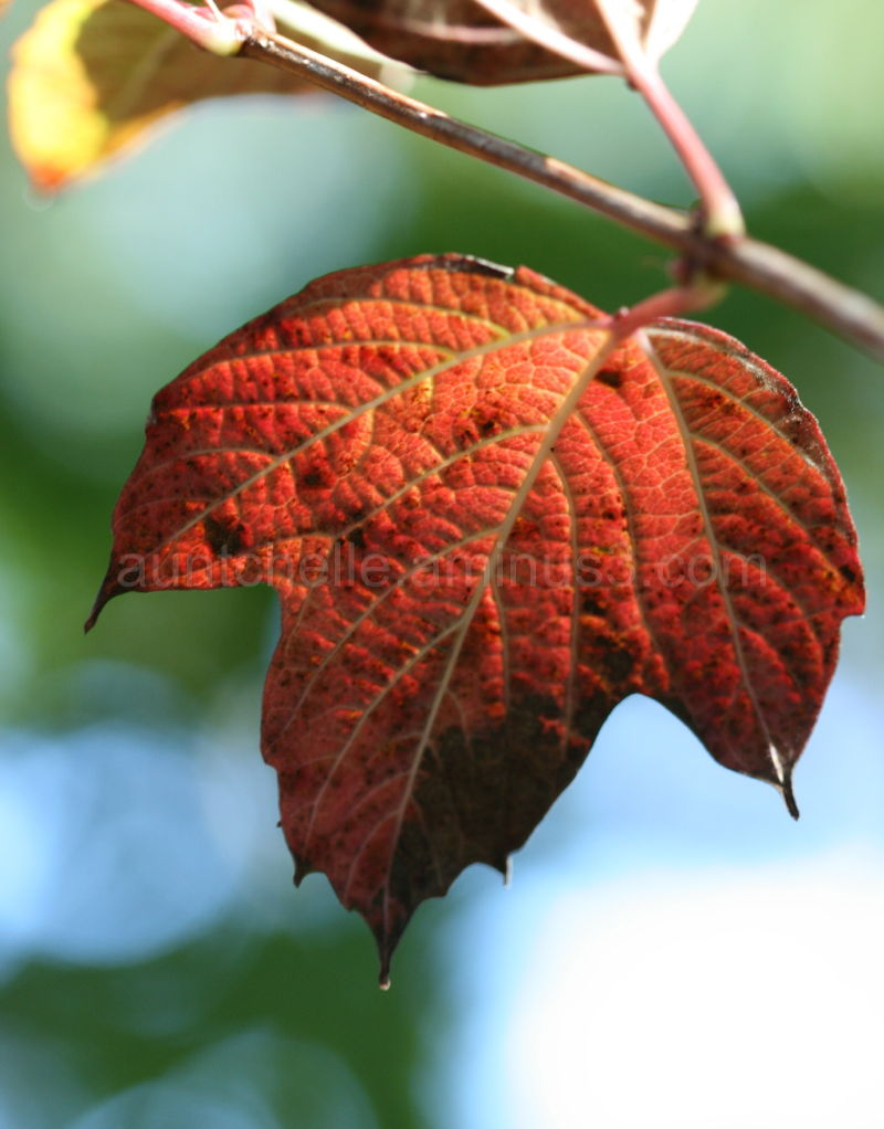 Leaf Glowing