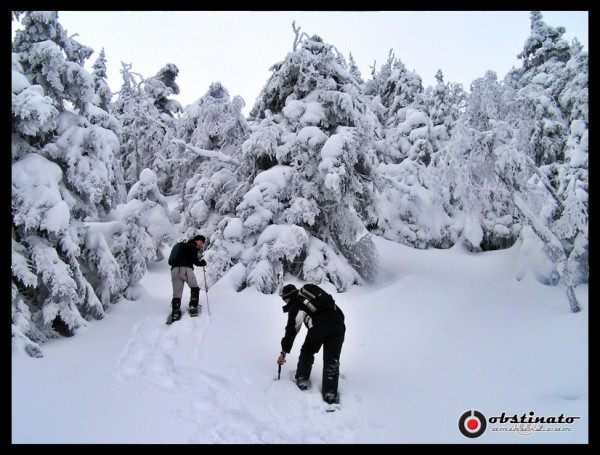 snowshoeing raquette snow neige